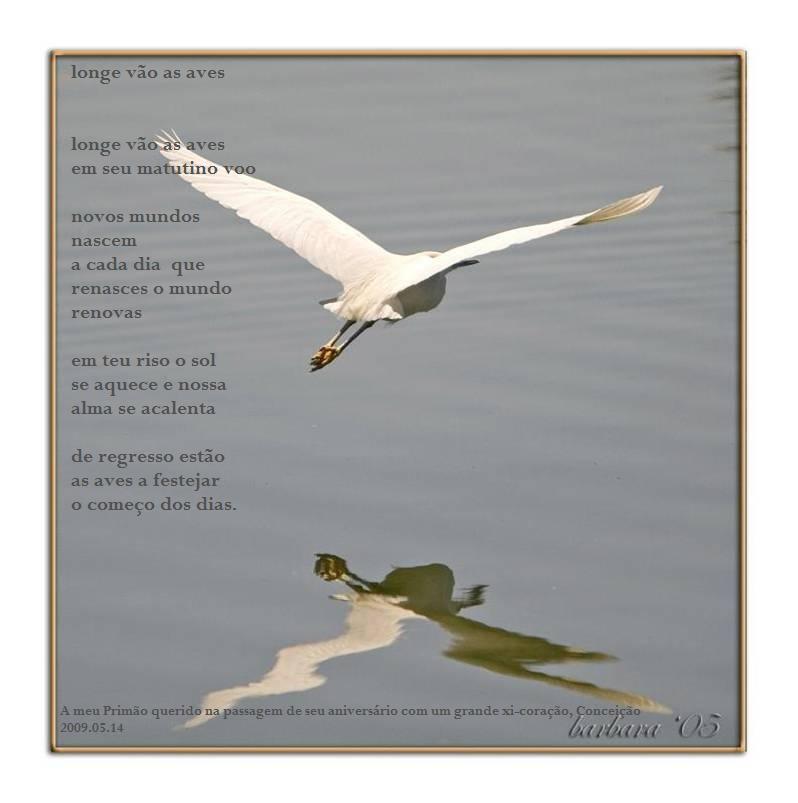 gaivota e sua imagem